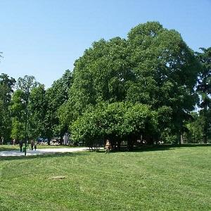 Milano Parco Sempione