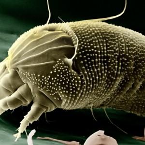 Acari della polvere ed allergie: tutto quello che c'è da sapere