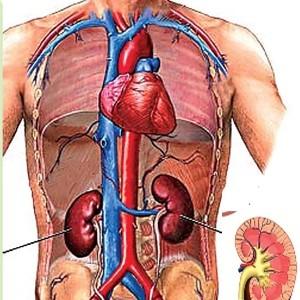 rene creatinina