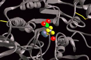 fosfatasi alcalina