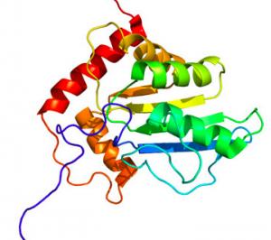 proteine nobili