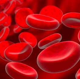 sangue sperma