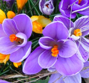 Quali fiori di bach si possono usare contro l 39 ansia for Tipi di fiori
