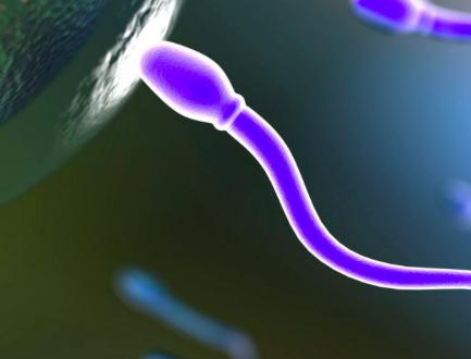 poca sperma