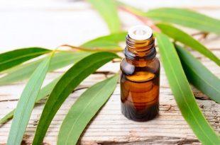 Olio essenziale di eucalipto a cosa serve